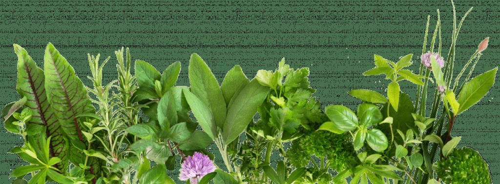 Curso de Plantas Medicinais